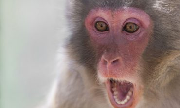 Hospital's New 'Therapy Monkey' Program Met with Mixed Reviews