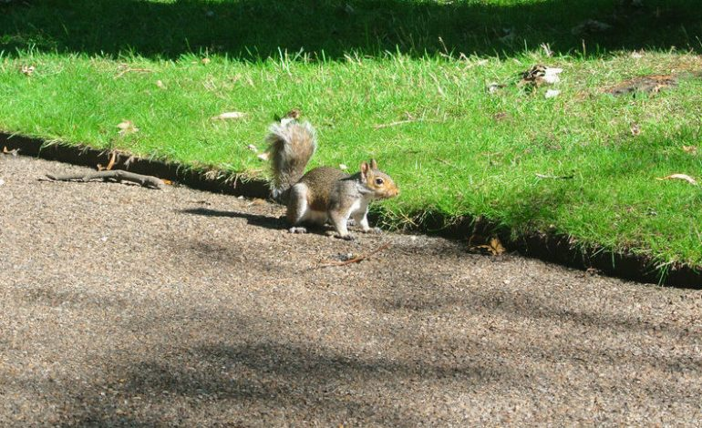CDC Memo to Squirrels: Stop Darting in Front of Cars at Last Possible Second
