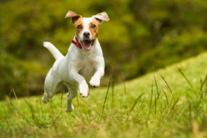 Veterinarians Overdiagnosing Pets with ADD